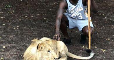 kara mbodj lion